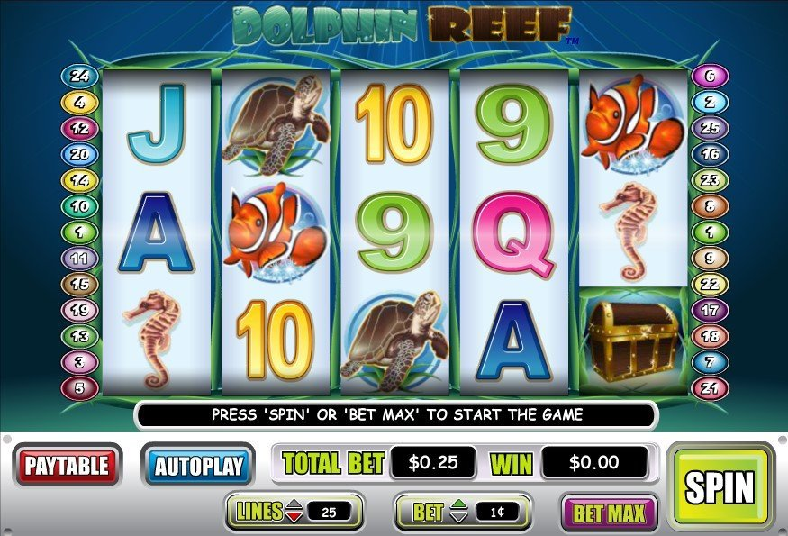 Dolphin Reef -165632